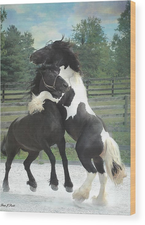 Horses Wood Print featuring the photograph The Posturing Game by Fran J Scott