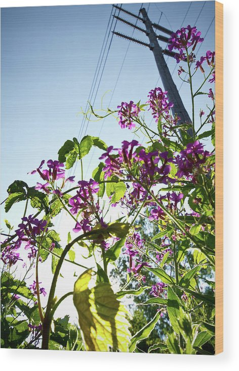 Flowers Wood Print featuring the photograph Up by Tim Fitzwater