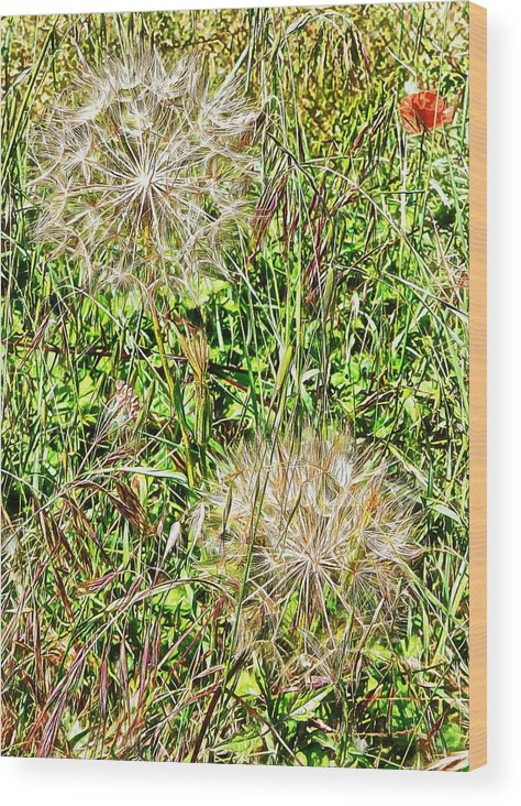 Flora Wood Print featuring the photograph Yellow Goats Beard 2 by Dorothy Berry-Lound
