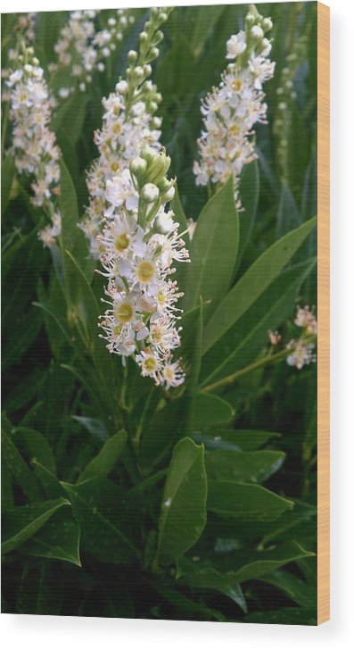 White Wood Print featuring the photograph Petite Yet Beautiful by Kevin D Davis