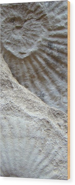 Fossil Wood Print featuring the photograph Fossil Two by Ana Villaronga