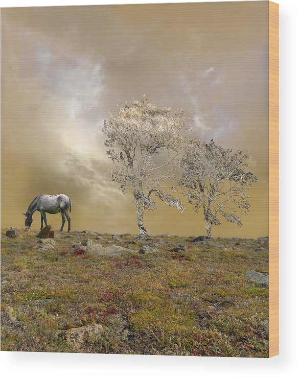 Mule Wood Print featuring the photograph 2793 by Peter Holme III