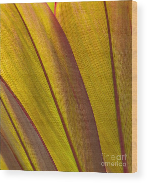 Bronstein Wood Print featuring the photograph Leaf Patterns by Sandra Bronstein