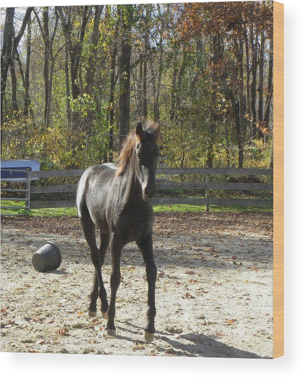 Friesian Horse Wood Print featuring the photograph Reserve Champion Filly by Kim Galluzzo Wozniak