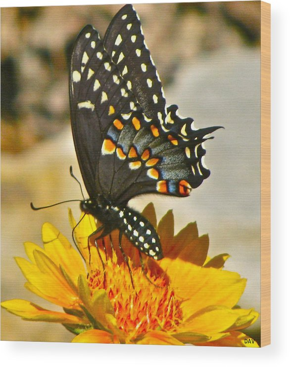 Butterfly On A Flower Wood Print featuring the photograph Butterfly Collection by Debra   Vatalaro