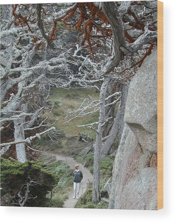 Lichens Wood Print featuring the photograph Ghost Trees by Douglas Barnett