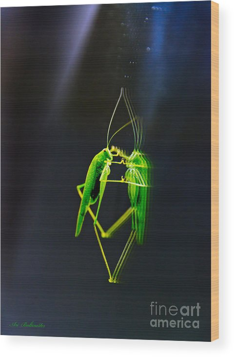 Pair Wood Print featuring the photograph A Pair Of One Dancer.... by Arik Baltinester