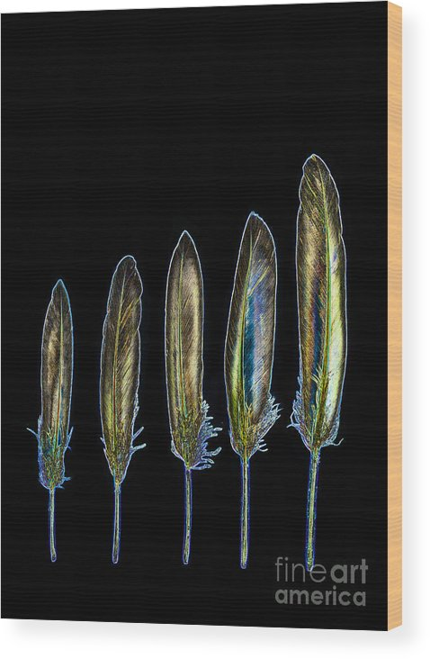 Growth Wood Print featuring the photograph Five Yellow Feathers by Rosemary Calvert