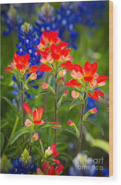 America Wood Print featuring the photograph Lone Star Blooms by Inge Johnsson