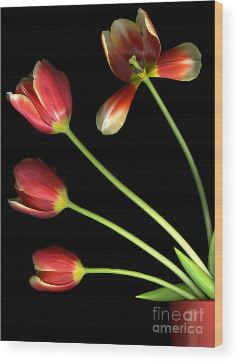 Scanography Wood Print featuring the photograph Pot Of Tulips by Christian Slanec