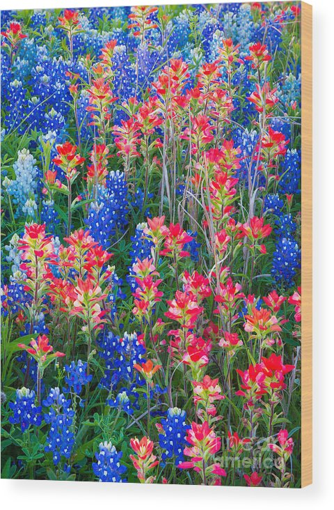 America Wood Print featuring the photograph Texan Quilt by Inge Johnsson