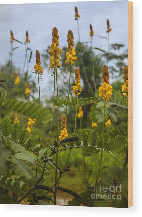 Yellow Wood Print featuring the photograph Tropical Plants by Regina Koch