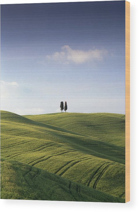 Photograph Wood Print featuring the photograph Twin Cypresses by Michael Hudson