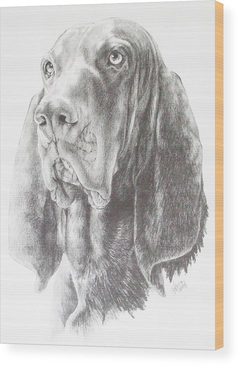 Purebred Dogs Wood Print featuring the drawing Black And Tan Coonhound by Barbara Keith