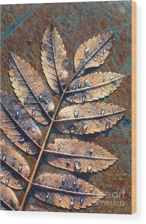 Rain Wood Print featuring the photograph After The Rain by Idaho Scenic Images Linda Lantzy