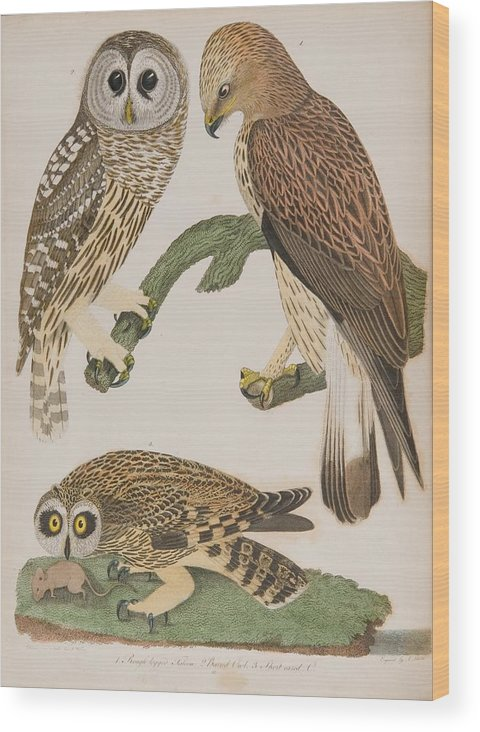 American Owl Wood Print featuring the painting American Owl by MotionAge Designs