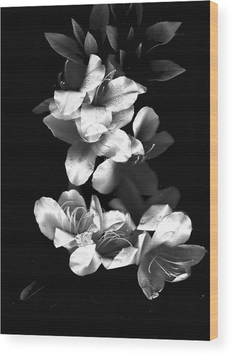 Azaela Wood Print featuring the photograph Azaela Blossom In Black And White by Wayne Potrafka