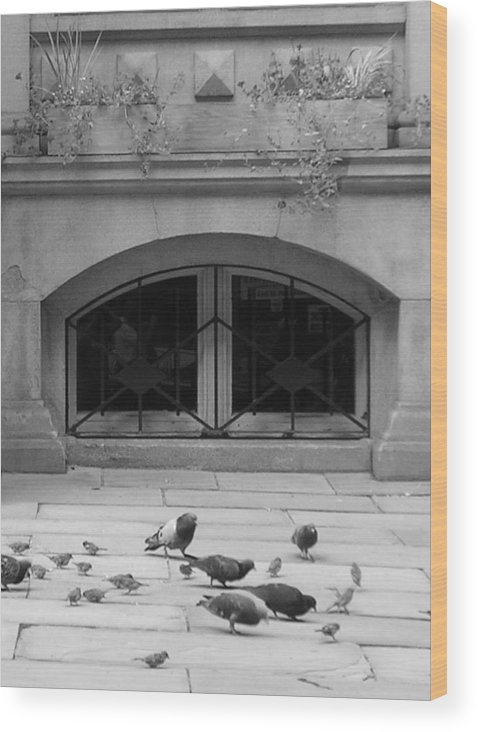 Pigeons Wood Print featuring the photograph Boston Scene by Nancy Ferrier