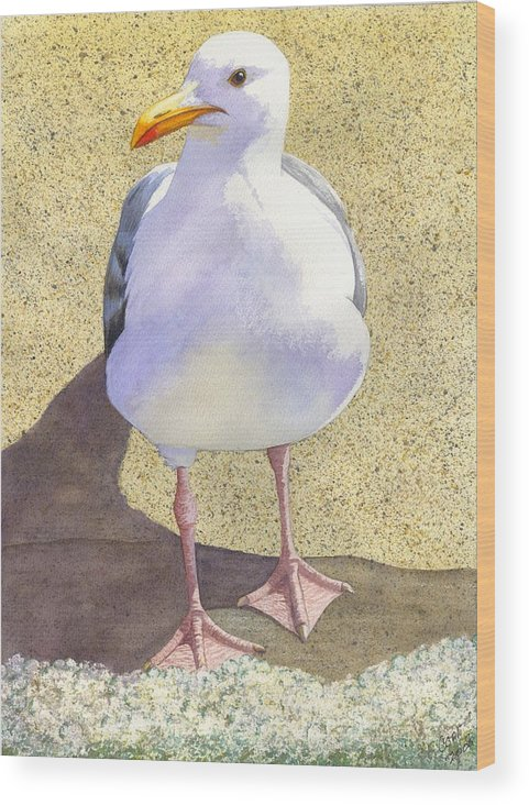 Seagull Wood Print featuring the painting Chilly by Catherine G McElroy