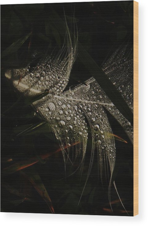 Feather Wood Print featuring the photograph Feather by Amy Neal