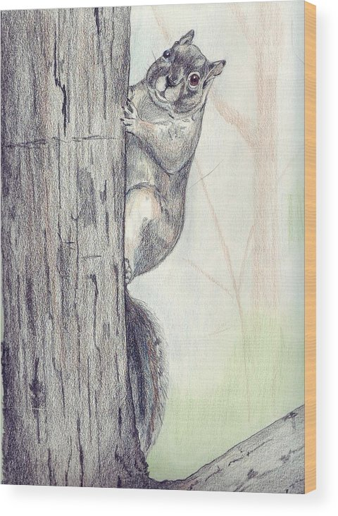 Color Pencil Wood Print featuring the drawing Feeder Raider by Debra Sandstrom
