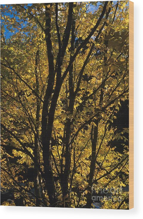 Autumn Wood Print featuring the photograph Golden Colors Of Autumn In New England by Erin Paul Donovan