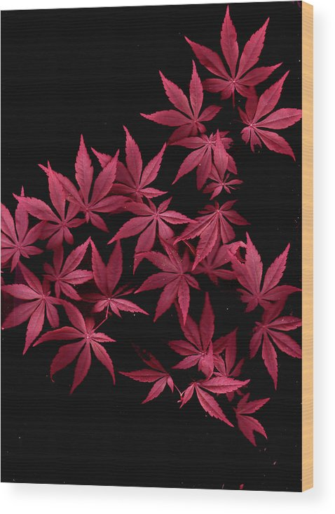 Japanese Maple Wood Print featuring the photograph Japanese Maple Leaves by Wayne Potrafka