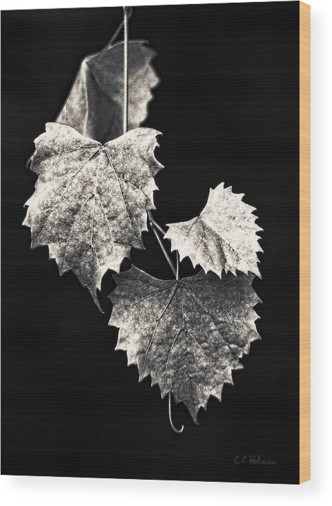 B&w Wood Print featuring the photograph Leaves by Christopher Holmes