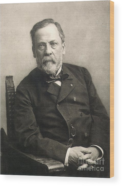 1889 Wood Print featuring the photograph Louis Pasteur (1822-1895) by Granger