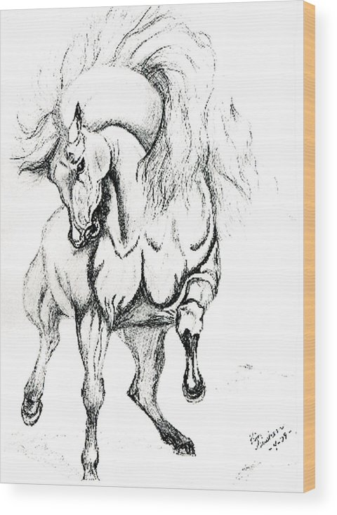 Horses Wood Print featuring the drawing Noble Stallion by Kim Souza