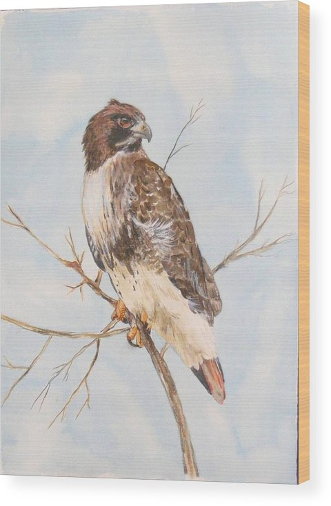 Wood Print featuring the painting Red Tail Hawk by Diane Ziemski