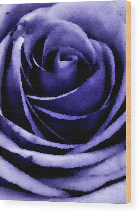Rose Wood Print featuring the photograph Rose by Candice Wright