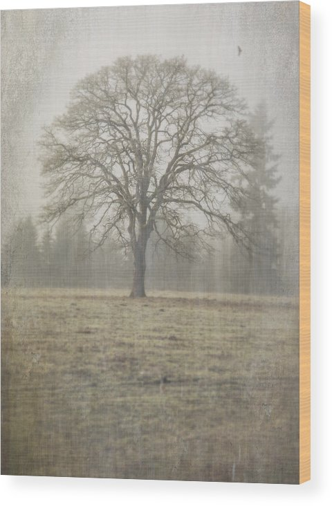 Oak Field Wood Print featuring the photograph Stands Alone by Nichon Thorstrom