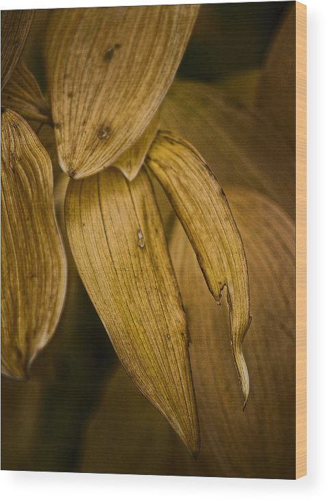 Leaf Wood Print featuring the photograph Summer's End by Robert Ullmann
