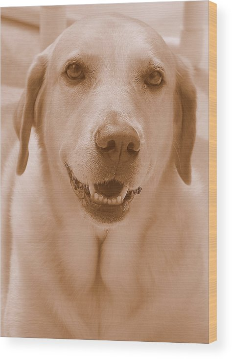 Labrador Retriever Wood Print featuring the photograph That Face by Karen Fields