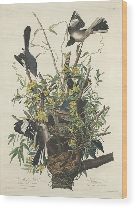 Audubon Wood Print featuring the drawing The Mockingbird by Dreyer Wildlife Print Collections