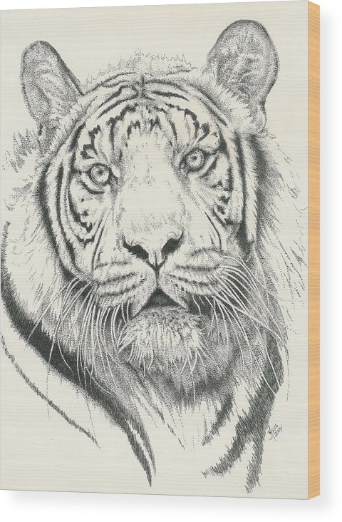 Tiger Wood Print featuring the drawing Tigerlily by Barbara Keith