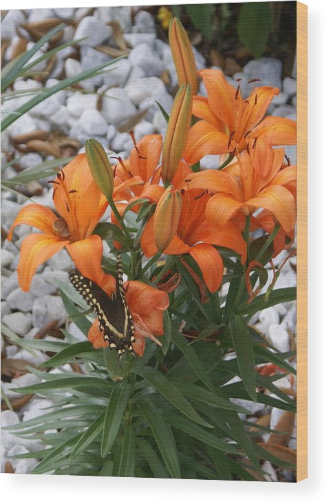 Flower Wood Print featuring the photograph Untitled by Debbie May
