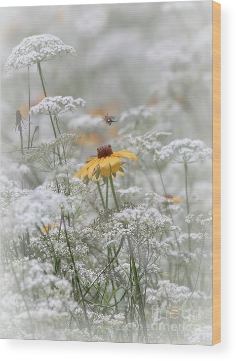 Flora Wood Print featuring the photograph Wrapped In Queen Anne's Lace by Robert Frederick