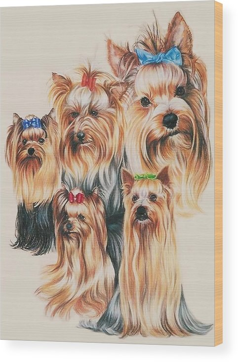 Purebred Wood Print featuring the drawing Yorkshire Terrier by Barbara Keith