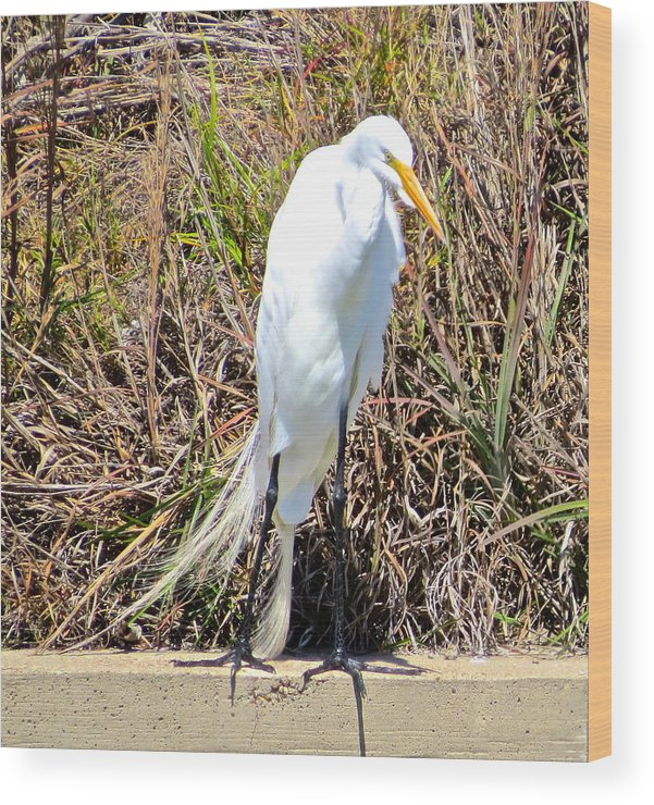 Brown Pelican Wood Print featuring the photograph Great Egret1 by Michael Anthony