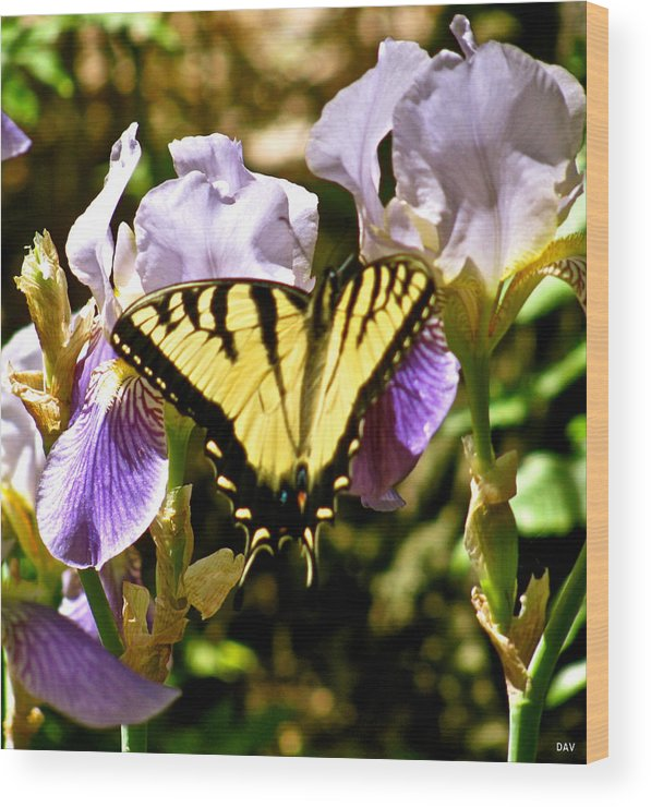 Image Of A Monarch Wood Print featuring the photograph Butterfly Collection Design by Debra   Vatalaro