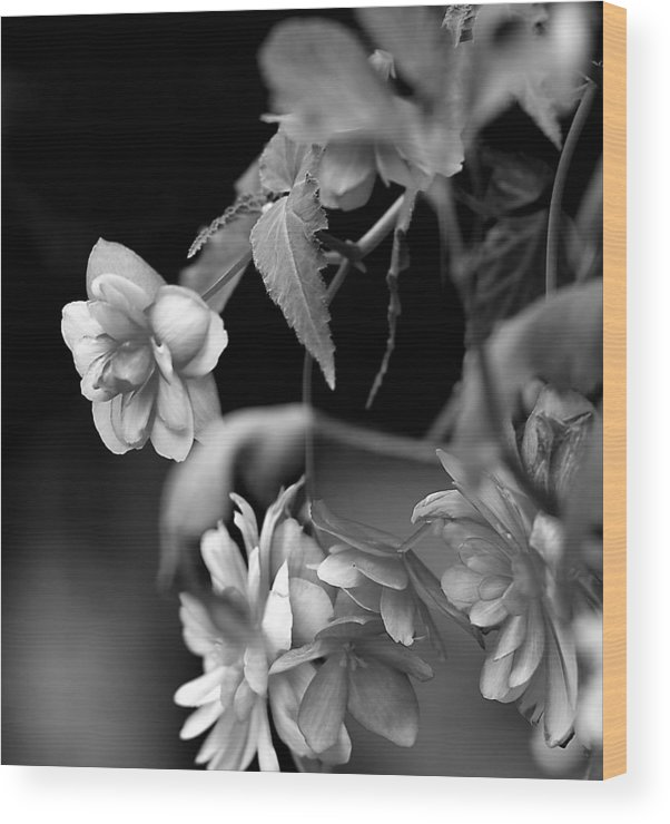 Flowers Wood Print featuring the photograph Begonias by Pat Carosone