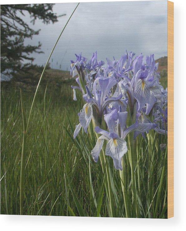 Flower Wood Print featuring the photograph Wild Iris II by Susan Pedrini