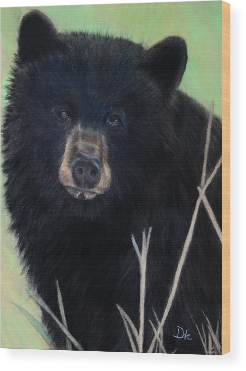 Black Bear Animal Wildlife Fur Coat Wild Animal Grass Outdoor Pastel Green Straw Woods Animals Pastel Painting Pastels Wood Print featuring the painting Black Bear Staredown by Dale Bradley