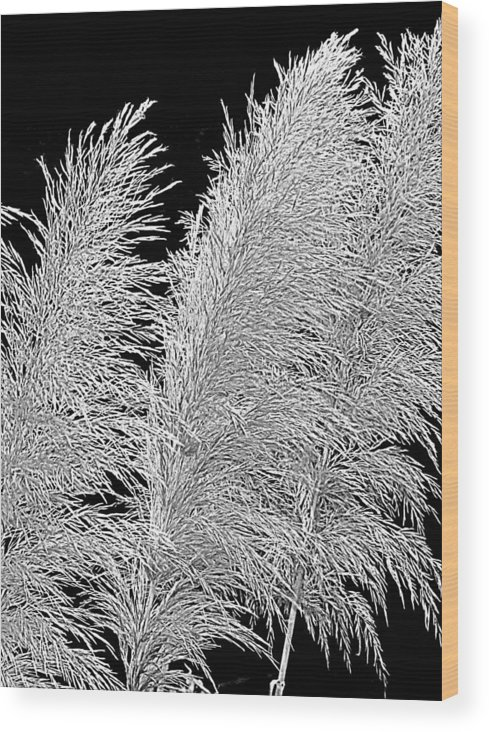 Pampas Grass Wood Print featuring the photograph Black Pampas by Suzy Piatt