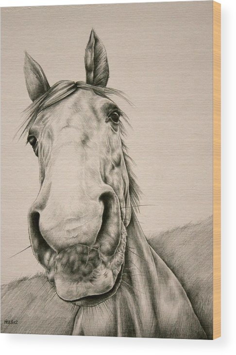Horse Wood Print featuring the drawing Curious by Helen Bennett