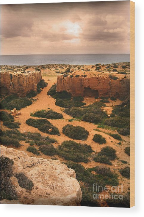 Cyprus Wood Print featuring the photograph Desert Mirage by Terry Brereton