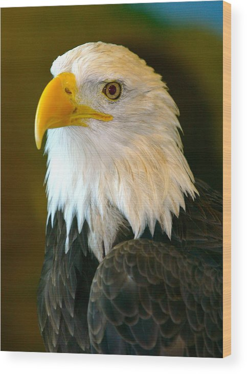 Eagle Wood Print featuring the photograph Eagle 3 by Reno Massimino