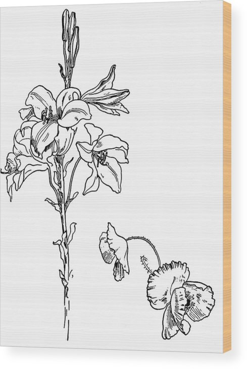 Lily And Poppy Wood Print featuring the drawing Lily And Poppy Flower Line Drawing by